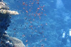Τμήμα Τεχνολογίας Αλιείας – Υδατοκαλλιεργειών